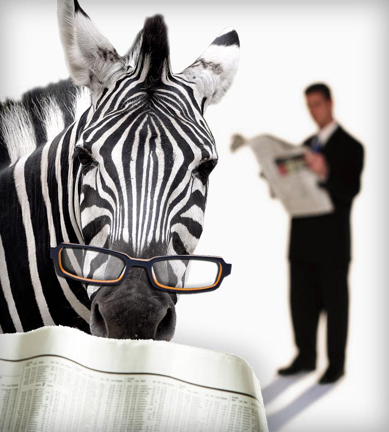 Daily Zebra